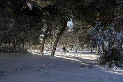 Árboles nevados hermosos de la mañana del invierno en el parque de la ciudad de Atenas, Grecia, 8va de enero de 2019 fotografía de archivo libre de regalías