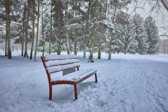 Árboles nevados y benche de madera en el parque de la ciudad imagenes de archivo