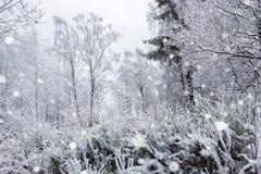 Árboles nevados y el nevar pesado en las montañas Imagen de archivo