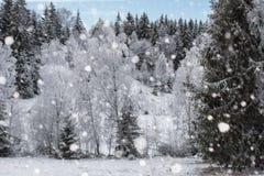 Árboles nevados y el nevar pesado en las montañas Fotografía de archivo