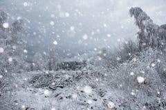 Árboles nevados y el nevar pesado en las montañas Fotos de archivo
