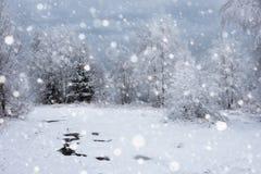 Árboles nevados y el nevar pesado en las montañas Foto de archivo