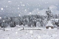 Árboles nevados y el nevar pesado en las montañas Foto de archivo libre de regalías