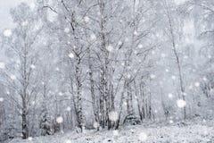 Árboles nevados y el nevar pesado en las montañas Imágenes de archivo libres de regalías