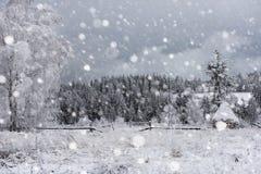 Árboles nevados y el nevar pesado en las montañas Imagen de archivo libre de regalías