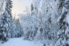 Árboles nevados y pequeño camino Foto de archivo