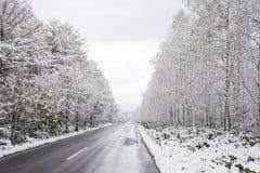 Árboles nevosos del borde de la carretera Foto de archivo