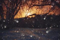 Árboles, nieves acumulada por la ventisca y copos de nieve imágenes de archivo libres de regalías