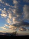 Árboles nublados Fotos de archivo