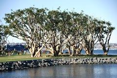 Árboles ornamentales en la marina de guerra Pier San Diego Imagenes de archivo