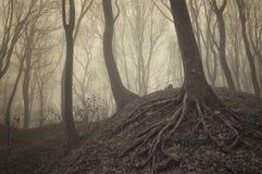 Árboles oscuros con las raíces visibles en un bosque con niebla Imagen de archivo