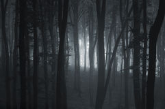 Árboles oscuros del canal de la niebla en bosque Imágenes de archivo libres de regalías