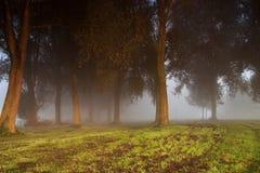 Árboles oscuros en la niebla Fotografía de archivo libre de regalías