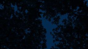 Árboles oscuros por encima en la noche metrajes