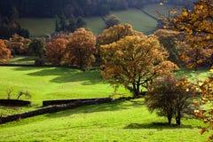 Árboles otoñales Imagenes de archivo
