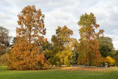 Árboles otoñales grandes Imagen de archivo libre de regalías