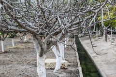 Árboles - otoño de Israel Imagenes de archivo