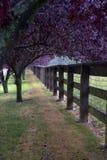 Árboles púrpuras a lo largo de una cerca Fotos de archivo