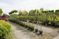 Árboles para la venta en fila, en potes Foto de archivo