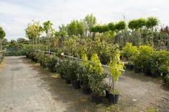 Árboles para la venta en fila, en potes fotos de archivo libres de regalías