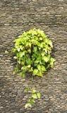 Árboles, paredes de piedra Foto de archivo libre de regalías