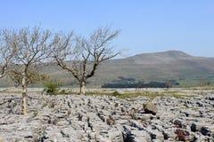 Árboles, pavimento de piedra caliza y Whernside Yorkshire Imagen de archivo libre de regalías