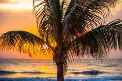 Árboles plantados en el mar con el levantamiento del sol Imagen de archivo