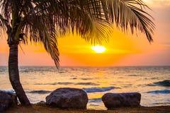 Árboles plantados en el mar con el levantamiento del sol Imagen de archivo libre de regalías