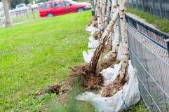 Árboles a plantar fotos de archivo
