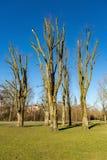 Árboles podados la Amsterdam Vondelpark Imagen de archivo libre de regalías