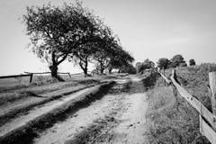 Árboles por el camino Imagen de archivo libre de regalías