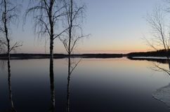 Árboles por el lago en la puesta del sol Fotografía de archivo