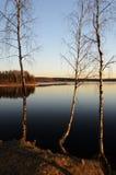 Árboles por el lago en la puesta del sol Imagenes de archivo