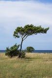 Árboles por el mar Foto de archivo