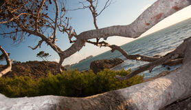 Árboles por el océano Foto de archivo libre de regalías