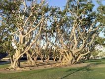 Árboles por el puerto fotos de archivo