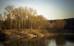 Árboles por el río Foto de archivo
