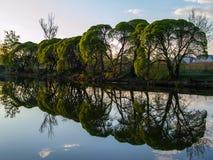Árboles por el río en la puesta del sol Foto de archivo