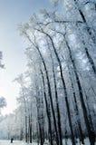 Árboles por la mañana Fotografía de archivo libre de regalías
