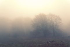 Árboles por la mañana y el efecto del vintage Fotografía de archivo libre de regalías
