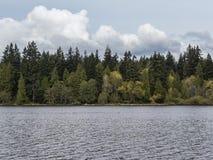 Árboles por la orilla del lago de la laguna perdida en el parque de Stanley en Vancouver imágenes de archivo libres de regalías