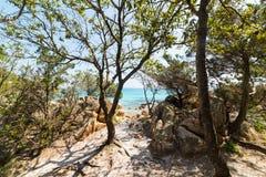 Árboles por la orilla en Capriccioli imagen de archivo libre de regalías