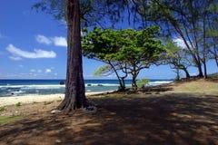 Árboles por la playa imagen de archivo libre de regalías