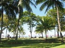 Árboles por la playa Imagenes de archivo