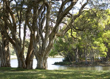 Árboles por un lago Imagen de archivo libre de regalías