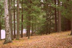 Árboles por un lago Fotos de archivo libres de regalías