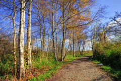 Árboles por una trayectoria en un parque Foto de archivo libre de regalías