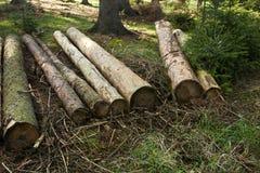 Árboles procesados Imagen de archivo