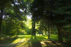 Árboles puestos a contraluz en el parque Foto de archivo libre de regalías