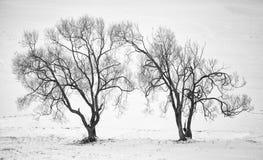 Árboles puestos en contraste alto del invierno Fotos de archivo libres de regalías